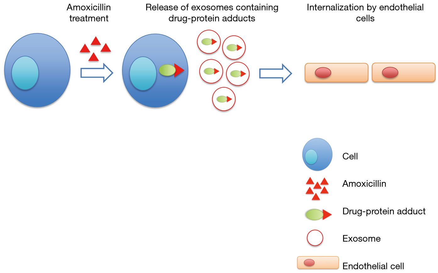 Intracellular proteins that are drug targets